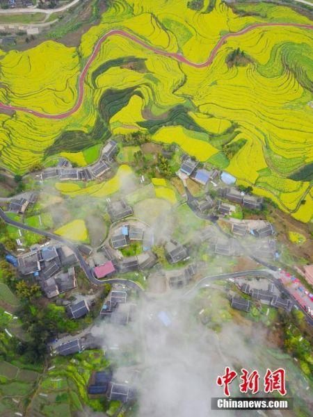 航拍余庆县红渡村外梯田盛开的油菜花。 中新社记者 贺俊怡 摄