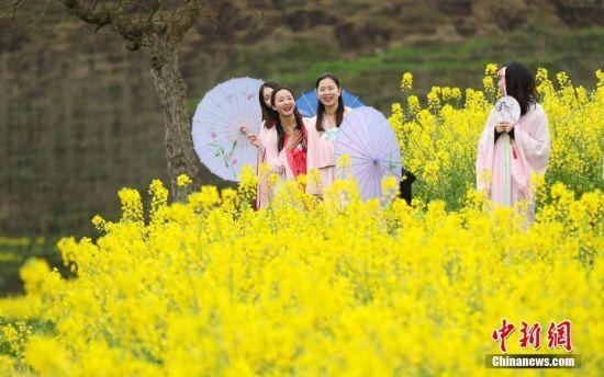 3月19日,一群身着汉服的女子在油菜花田里走秀。当日,贵州省余庆县红渡村举办第二届油菜花节,村外盛开的万亩油菜花田里,汉服爱好者在田间走秀,吸引游客。 中新社记者 贺俊怡 摄