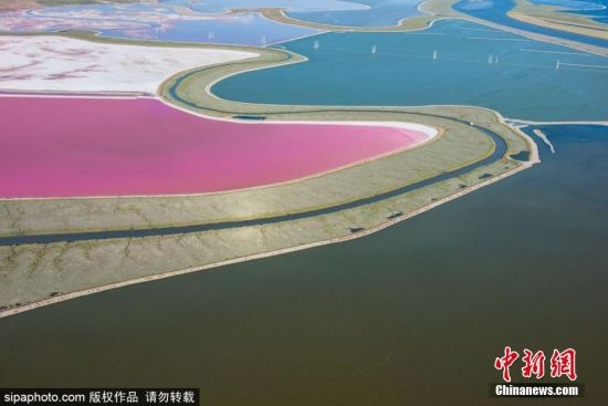 近日,美国旧金山,航拍多彩盐蒸发池。摄影师Jason Hawkes在乘坐直升机飞过南圣弗朗西斯科湾上空时拍下了这绝美的盐池,鲜亮的粉色、橙色、绿色构成错落有致的景观。Jason Hawkes说在这里有将近8000英亩盐蒸发池,被唐・爱德华兹旧金山湾国家野生动物保护区保护。这里同时还是超过70种鸟类的栖息地。图片来源:Sipachina 版权作品 请勿转载