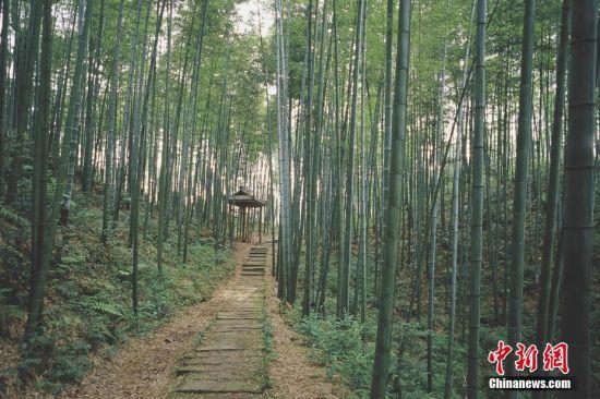 贵州赤水,竹海森林公园,竹海. 陈锦 摄 图片来源:ctpphoto