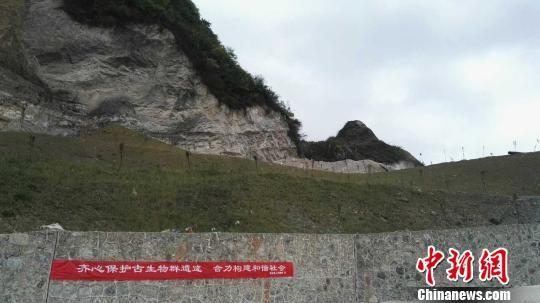 贵州省瓮安县采取措施积极推进古生物化石资源保护。 赵素娥 摄