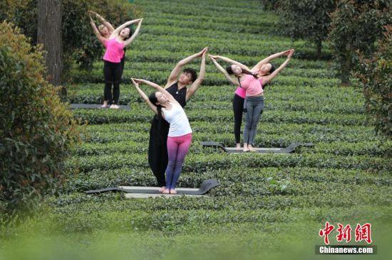 """4月12日,瑜伽爱好者在茶园为游客表演。近日,贵州省凤冈县茶海之心仙人岭景区2000余亩有机茶园进入采摘季,景区为了吸引游客,组织瑜伽爱好者在茶园中表演,让到访的游客体验别样的茶海之旅。据悉,贵州省凤冈县大力发展""""茶旅一体"""",已获得""""全国休闲农业与乡村旅游示范县""""、""""中国长寿之乡""""称号,茶海之心景区成功创建为国家AAAA级旅游景区,茶海之心旅游线路被评为中国最佳茶旅线路,九堡十三湾和仙人岭已被评为中国30座最美茶园。 中新社记者 贺俊怡 摄"""