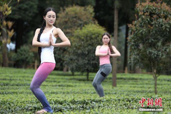 """4月12日,两名瑜伽爱好者在茶园为游客表演。近日,贵州省凤冈县茶海之心仙人岭景区2000余亩有机茶园进入采摘季,景区为了吸引游客,组织瑜伽爱好者在茶园中表演,让到访的游客体验别样的茶海之旅。据悉,贵州省凤冈县大力发展""""茶旅一体"""",已获得""""全国休闲农业与乡村旅游示范县""""、""""中国长寿之乡""""称号,茶海之心景区成功创建为国家AAAA级旅游景区,茶海之心旅游线路被评为中国最佳茶旅线路,九堡十三湾和仙人岭已被评为中国30座最美茶园。 中新社记者 贺俊怡 摄"""