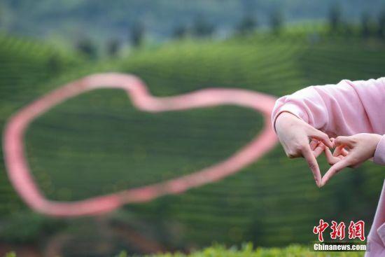 """4月12日,游客在凤冈县知青茶山手比""""心""""型拍摄留念。贵州省凤冈县何坝镇知青茶山,发展以知青文化为主题的文化园,吸引游客前来追寻回忆,2016年年接待游客8万人次,知青茶山种植的有机生态茶叶2014年获得有机认证,远销海内外,辐射带动884户3512人增收致富。 中新社记者 贺俊怡 摄"""