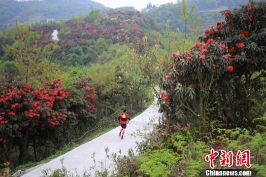 图为选手沿途穿越中国面积最大品种最多的原生杜鹃林。 组委会供图 摄