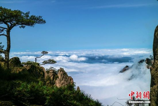 """安徽黄山风景区""""谷雨""""后出现大面积云海"""