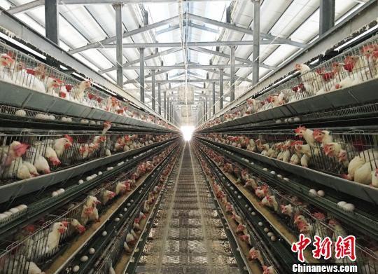 """台商廖本坤认为贵州快速发展让他找到事业""""第二春""""。 杨云 摄"""