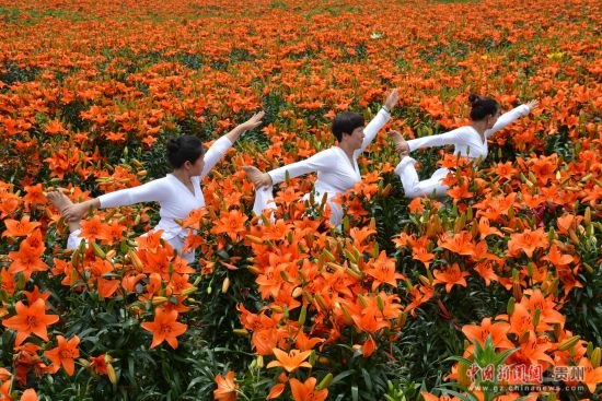 图为瑜伽爱好者在花海中展示瑜伽