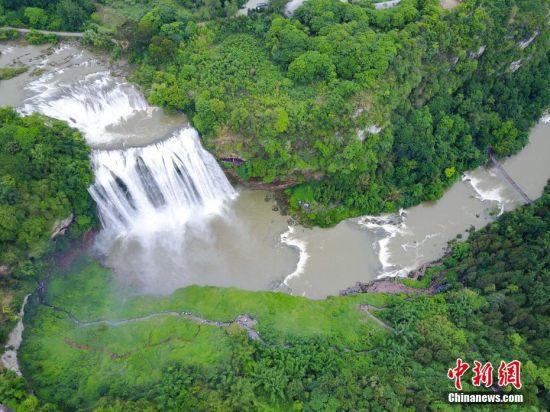 受强降雨影响,位于贵州省安顺市的黄果树瀑布进入丰水期。 中新社记者 贺俊怡 摄