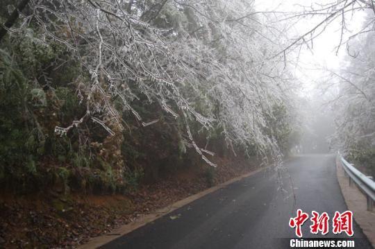 凝冻天气导致树枝结冰。 田林 摄
