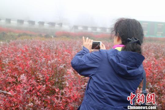 中国驻旧金山总领事罗林泉的夫人乔力正在拍照留念。冷桂玉 摄