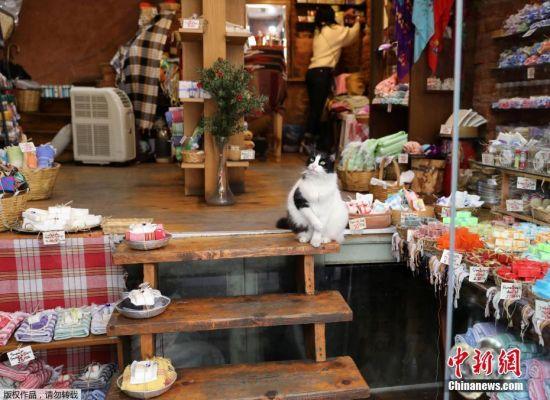伊斯坦布尔人发自内心的爱护城市里的这些流浪猫,每个街道不起眼的角落里都会有干净的塑料盒子装着猫粮和水。人们不会去刻意撸猫,他们把猫看做与他们一起生活在这个千年古城里的邻居。