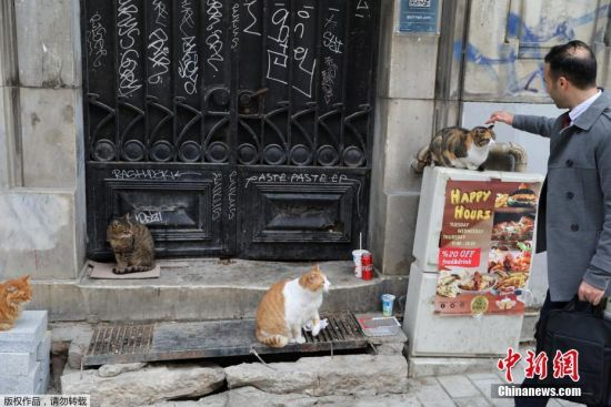 走过的行人忍不住抚摸一下蹲在街头的猫咪。