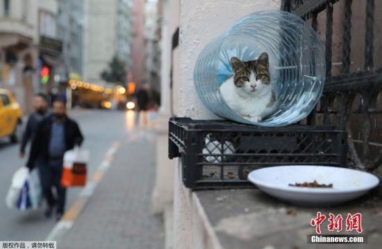 一只猫卧在由水瓶做成的窝里休息。