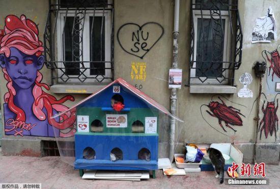 伊斯坦布尔街头一个供流浪猫休息的猫窝。