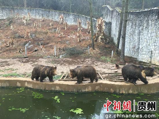 pk10直播网:贵州森林野生动物园春节期间变成亲子乐园