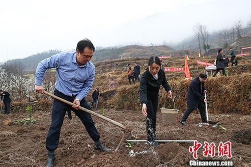 3月11日,春晖行动志愿者在植树。中新社记者 贺俊怡 摄