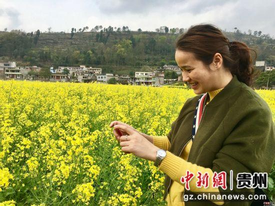 贵州福泉油菜花开引游客拍照忙 杨云 摄