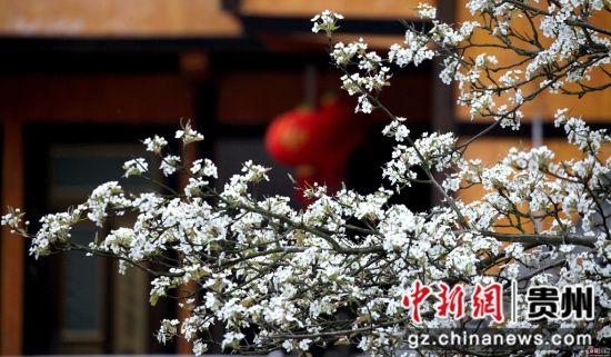 施秉县城关镇白塘村赖洞坝组是该县新农村建设示范点,各家小院前后左右内外洋溢着生机和美感。