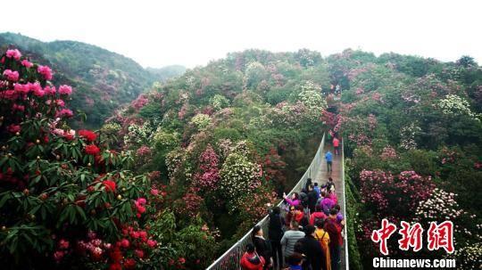 游客在观赏杜鹃花。