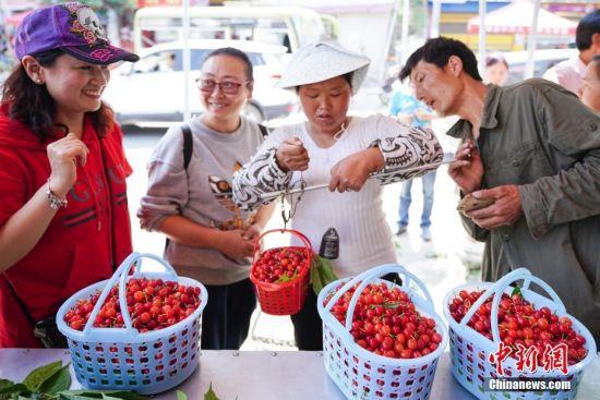 4月13日,贵州省镇宁县募役镇樱桃交易市场,游客在购买樱桃。时下,正是贵州省镇宁县樱桃采摘上市时期,吸引游客及水果商前来试吃采摘。镇宁县樱桃种植面积有5.61万亩,樱桃种植由传统的农户分散种植逐步形成特色产业,2017年带动农户4333户19501人,脱贫2103人,樱桃种植成为农业产业扶贫的特色产业。中新社记者 贺俊怡 摄