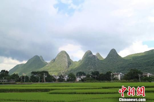 贵州省兴义市万峰林景区。冷桂玉 摄