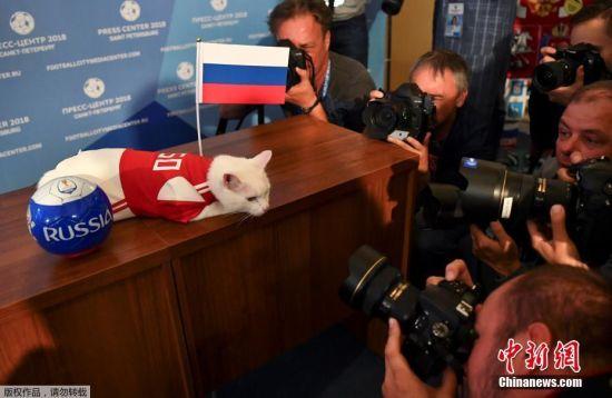 """Achilles出生在被称为世界四大博物馆之一的俄罗斯冬宫博物馆。为了保护博物馆里的珍品免受老鼠侵害,18世纪时,叶卡捷琳娜二世女皇正式确立了警卫猫制度。而Achilles正是""""警卫猫""""的后代。"""