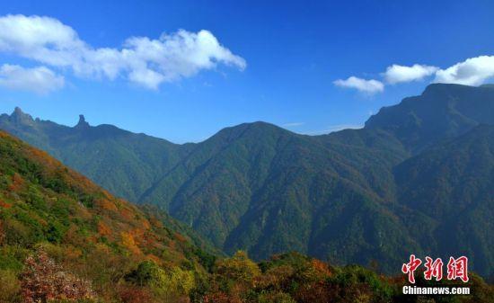 梵净山位于贵州省铜仁市境内,是武陵山脉主峰,遗产地面积402.75平方公里,缓冲区面积372.39平方公里。梵净山生态系统保留了大量古老孑遗、珍稀濒危和特有物种,拥有4394种植物和2767种动物,是东方落叶林生物区域中物种最丰富的热点区域之一;是黔金丝猴和梵净山冷杉唯一的栖息地和分布地,是全球裸子植物最丰富的地区,是水青冈林在亚洲最重要的保护地,也是东方落叶林生物区域中苔藓植物最丰富的地区。文/陈溯 周燕玲 国家林业和草原局供图