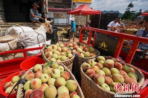贵州兴义普梯村桃子交易市场一角。中新社记者 贺俊怡 摄