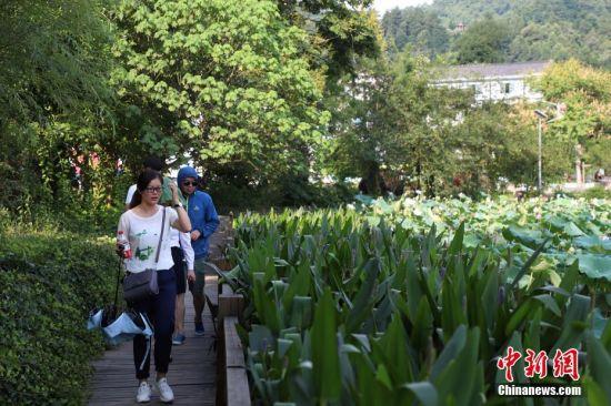 游客行走在湄潭县兴隆镇龙凤村田家沟荷花栈道上。 瞿宏伦 摄