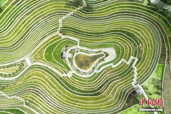 7月30日,俯瞰位于贵州省大方县奢香古镇的古彝梯田美景,相连的梯田
