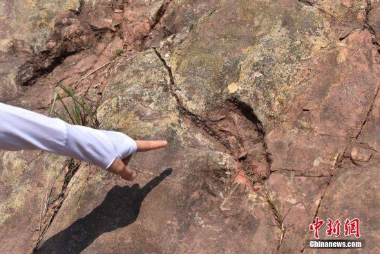 8月10日,中美德足迹考察队的专家学者在京宣布,他们在贵州省仁怀市茅台镇下侏罗统发现了大规模的恐龙足迹群。论文发表在国际知名地学期刊《Geoscience Frontier》(地学前缘)上。据悉,该恐龙足迹群为一群蜥脚类恐龙在不同时段留下,是我国侏罗纪早期规模最大的蜥脚类足迹群,该发现对研究中国侏罗纪早期恐龙动物群的分布与演化具有重要意义。 中新社发 陈勇 摄