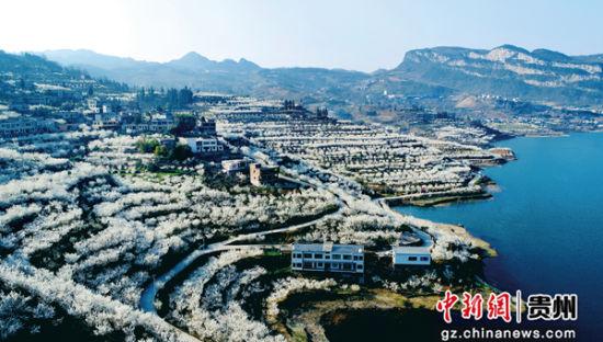 毕节市织金县马场凹河万亩樱桃产业园