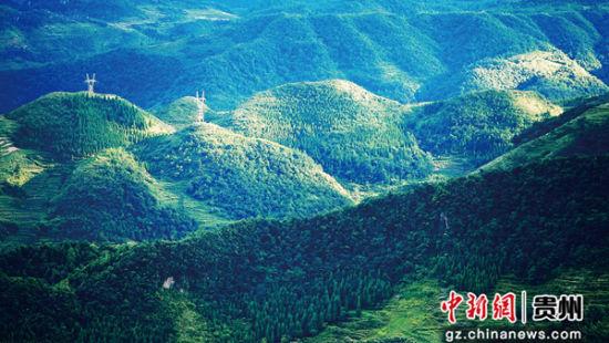 """毕节市织金县""""3356""""造林工程 珠藏镇 吴运华 摄"""
