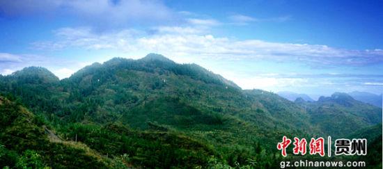 织金县2003年城关镇新寨村退耕还林(县林业局提供)