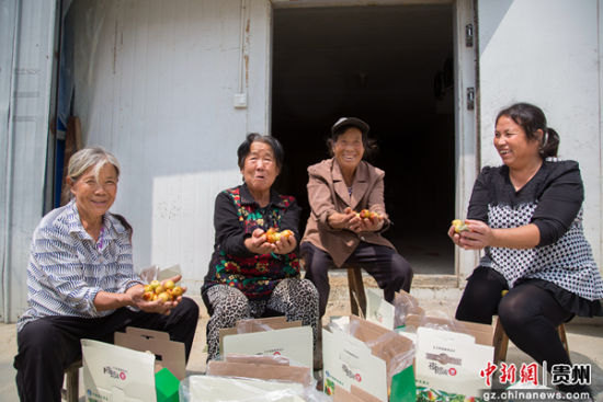 铜仁市万山高楼坪夜郎村蜜枣已陆续成熟。肖浩