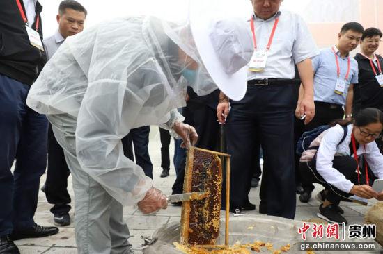 观摩团参观蜂蜜现场切割