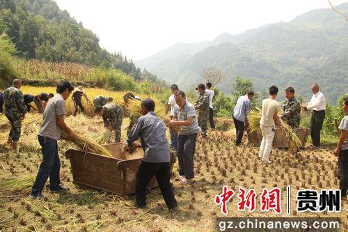 9月24日,贵州省望谟县新屯街道办纳包村党员在帮助贫困户收割稻谷。