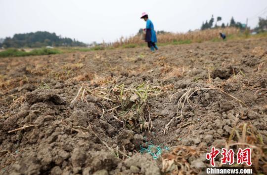 图为村民在蔬菜地里施肥。 黄晓海 摄