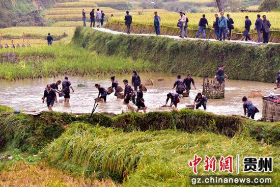 2018年10月10日,在贵州省从江县高增乡占里村,当地侗族同胞集中展示捉到稻花鱼。 吴德军摄