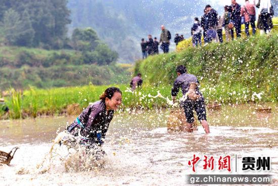 图为当地侗族同胞在稻田里捉鱼嬉戏。 吴德军 摄