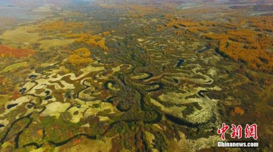 时间进入深秋,吉林沙河湿地自然保护区色彩斑斓,湿地水道似长龙伏地。由于今年雨水充沛,湿地草木茂盛,秋景更加壮美。吉林沙河湿地自然保护区位于吉林省敦化市大石头镇境内,保护区湿地面积10703公顷,占保护区总面积的50.2%。李军俊 摄