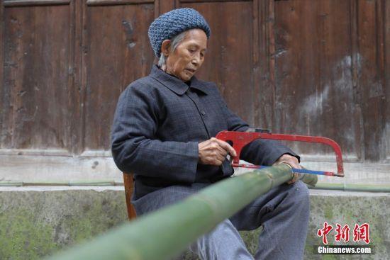 """12月3日,宋尔凤老人将竹子锯成两段。1940年出生的宋尔凤老人是贵州省铜仁市思南县塘头镇红旗村""""塘头棕丝斗笠""""制作工艺的传承人,她从小就开始学习斗笠制作,现年78岁的她依旧坚持用""""细如发丝""""的竹子编织斗笠。""""塘头棕丝斗笠""""制作历史久远,明朝时期就已成为贡品。制作斗笠需要经过选竹、切丝、揉丝、分层、打磨、编织等工序,做工极为精细。 中新社记者 瞿宏伦 摄"""