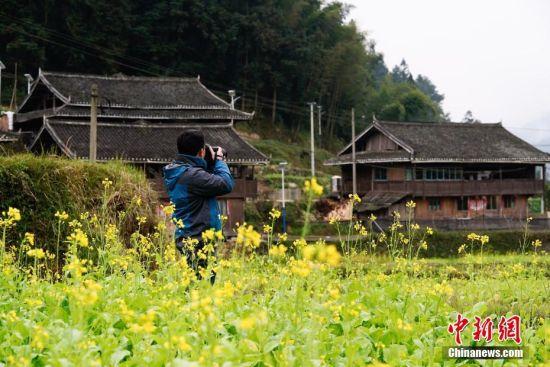 12月15日,贵州省榕江县寨蒿镇三洲村侗寨外油菜花开,为冬日增添融融暖意。图为一位摄影爱好者正在拍摄。中新社记者 贺俊怡 摄