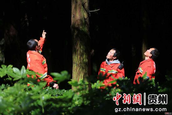 1月3日,张建(左)、张忠(右)、张华三兄弟在贵州省毕节市七星关区拱拢坪林场护林巡山 王纯亮