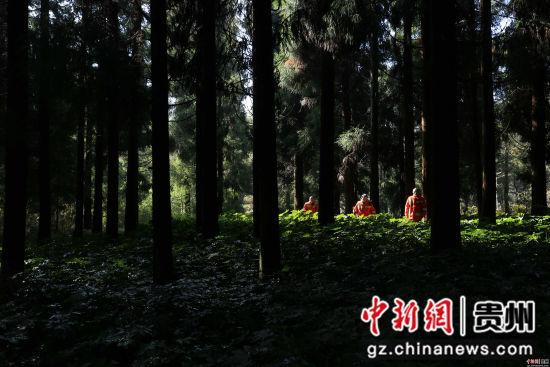 1月3日,张建、张忠、张华三兄弟在贵州省毕节市七星关区拱拢坪林场护林巡山。 王纯亮 摄