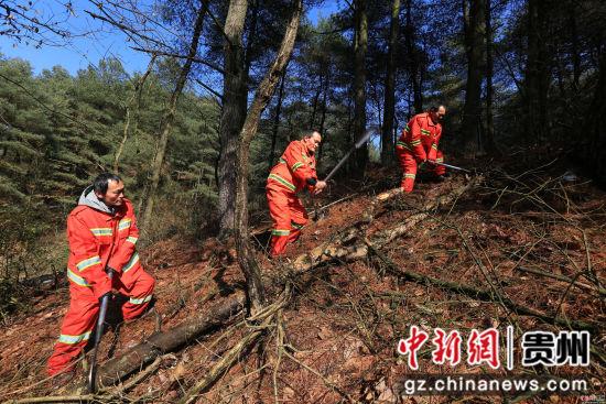 1月3日,张建、张忠、张华三兄弟在贵州省毕节市七星关区拱拢坪林场护林巡山时,清理林中的枯木。王纯亮 摄
