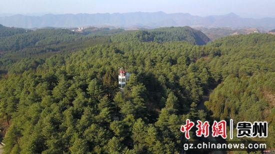 1月3日,张建、张忠、张华三兄弟在贵州省毕节市七星关区拱拢坪林场护林巡山时,在�t望塔上观察林场动态。王纯亮 摄