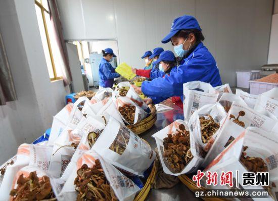 图为工人在分装茶树菇。 龙元彬 摄