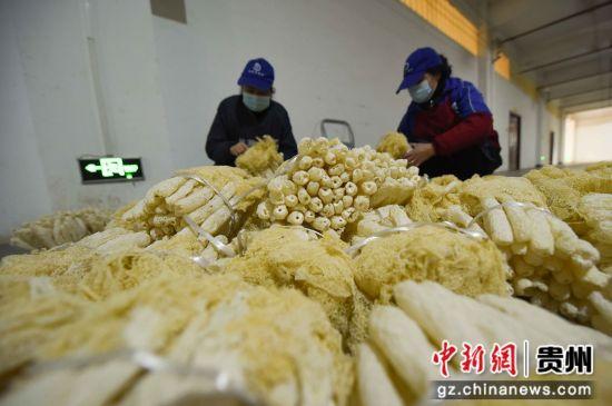 图为工人在分装竹荪。 龙元彬 摄
